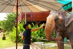 O homem tailandês alimenta um elefante. Imagens de Stock Royalty Free
