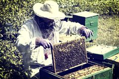 O homem trabalha em um apiário que recolhe o mel da abelha Fotos de Stock