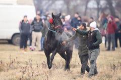 O homem trata um cavalo decorado antes de uma corrida de cavalos da celebração do esmagamento fotografia de stock royalty free