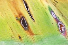 O horizontal de Fern Leaf com furos Fotos de Stock