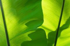 O horizontal folha verde do fundo Textured Fotos de Stock Royalty Free