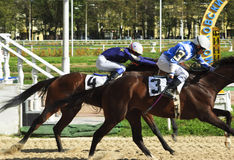 O horserace para o prêmio   imagem de stock royalty free