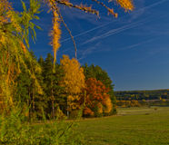 O Horsetail do verde de grama da floresta do verde do incêndio violento da natureza cresce o céu do campo Fotos de Stock
