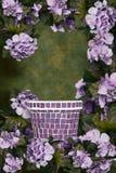 O Hydrangea verde e roxo do fundo floresce o fundo Fotos de Stock