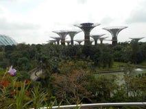 O impressionante, suspendido no ar jardina pela baía, Singapura foto de stock
