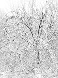 O início do inverno com quedas de neve pesadas A beleza da natureza no inverno fotos de stock royalty free