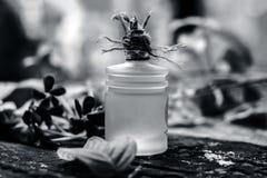 O indicum de Combretum, óleo do ` s da trepadeira de Rangoon em uma garrafa de vidro na superfície de madeira rústica com ele o ` Imagens de Stock