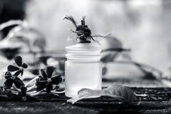 O indicum de Combretum, óleo do ` s da trepadeira de Rangoon em uma garrafa de vidro na superfície de madeira rústica com ele o ` Foto de Stock Royalty Free