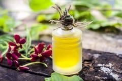 O indicum de Combretum, óleo do ` s da trepadeira de Rangoon em uma garrafa de vidro na superfície de madeira rústica com ele o ` Imagem de Stock Royalty Free