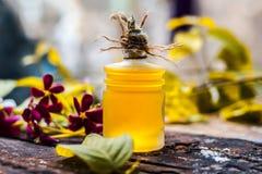 O indicum de Combretum, óleo do ` s da trepadeira de Rangoon em uma garrafa de vidro na superfície de madeira rústica com ele o ` Fotos de Stock Royalty Free