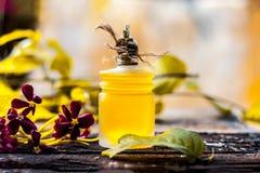 O indicum de Combretum, óleo do ` s da trepadeira de Rangoon em uma garrafa de vidro na superfície de madeira rústica com ele o ` Imagens de Stock Royalty Free