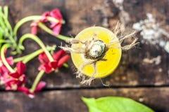 O indicum de Combretum, óleo do ` s da trepadeira de Rangoon em uma garrafa de vidro na superfície de madeira rústica com ele o ` Fotos de Stock