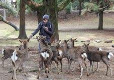 O indivíduo alimenta os cervos no parque Imagem de Stock