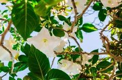 O inferior de uma flor branca imagens de stock royalty free