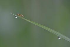 O inseto engraçado Foto de Stock Royalty Free
