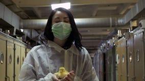 O inspetor com o patinho nas mãos anda através do corredor perto das incubadoras na exploração agrícola filme