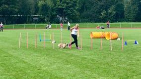 O instrutor de cão fêmea comanda o cão de filhote de cachorro Imagem de Stock Royalty Free