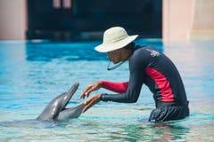 O instrutor do ` s do golfinho joga com o golfinho Fotos de Stock Royalty Free