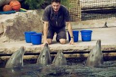 O instrutor está comunicando-se com os golfinhos Fotografia de Stock Royalty Free