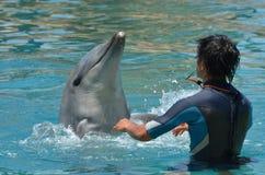 O instrutor interage com o golfinho Fotos de Stock