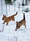 O inverno é assim divertimento Fotografia de Stock