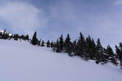 O inverno ajardina o parque nacional de Banff Foto de Stock Royalty Free