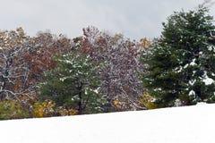 O inverno chega cedo Foto de Stock Royalty Free
