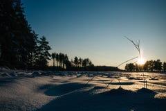 O inverno coloca o por do sol com neve Imagem de Stock Royalty Free