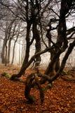 O inverno começa na floresta foto de stock royalty free