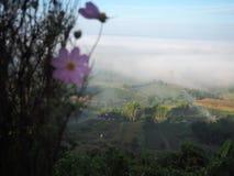 O inverno da árvore do céu deixa a névoa Fotografia de Stock Royalty Free