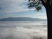 O inverno deixa a luz de névoa Fotos de Stock Royalty Free