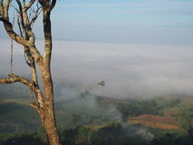 O inverno deixa a névoa Imagens de Stock