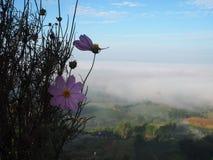 O inverno deixa o sol do lihgt da névoa Fotografia de Stock