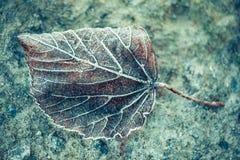 O inverno desvaneceu-se textura do close up da folha Foto de Stock