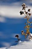 O inverno está aqui! Fotografia de Stock