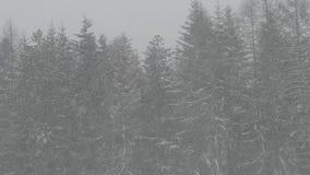 O inverno está vindo vídeos de arquivo
