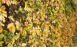 O inverno está vindo seu agora outono Imagens de Stock