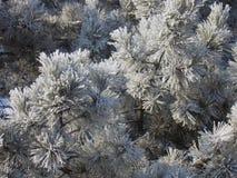 O inverno floresce o fundo Fotografia de Stock Royalty Free
