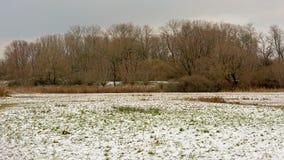 O inverno no sof da região pantanosa bourgoyen a reserva natural Foto de Stock Royalty Free