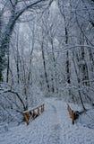 O inverno veio Imagem de Stock Royalty Free