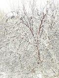O inverno veio As árvores são cobertas com a neve Ofensiva do inverno fotografia de stock royalty free