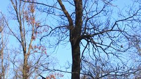 O inverno veio, muita neve, árvores está desencapado vídeos de arquivo