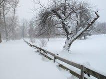 O inverno vem à vizinhança Fotos de Stock Royalty Free