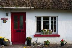 O irlandês tradicional cobriu com sapê a casa de campo Foto de Stock Royalty Free