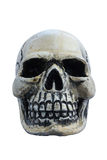 O isolado humano do crânio no fundo branco Fotos de Stock Royalty Free
