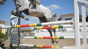 O jóquei fêmea profissional irreconhecível monta a cavalo O cavalo é de galope e de salto através de uma barreira dentro filme