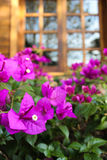 O jardim Foto de Stock Royalty Free