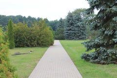 O jardim botânico acorda após um sonho doce Paisagem com abetos vermelhos e os thujas azuis fotos de stock royalty free