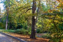 O jardim botânico nacional imagem de stock royalty free