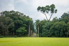 O jardim botânico real Fotos de Stock